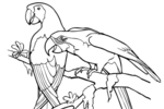 Tranh tô màu 2 con vẹt đỏ đuôi dài
