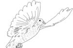 Tranh tô màu chim bồ câu đang bay