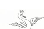 Tranh tô màu chim công nhảy múa