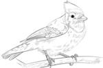Tranh tô màu chim giẻ cùi lam