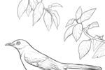 Tranh tô màu chim nhại trên cành cây