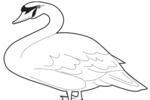 Tranh tô màu con chim thiên nga