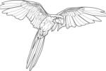Tranh tô màu con vẹt đang bay