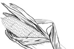 Tranh tô màu trái bắp