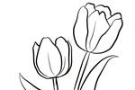 Tranh Tô Màu Hoa Tulip, tải bộ tranh Tô Màu Hoa Tulip về máy tính điện thoại
